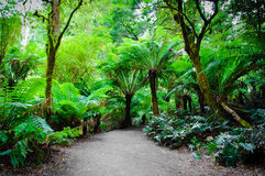 Maits Rest Rainforest Trail on Great Ocean Road, Australia Royalty Free Stock Photography