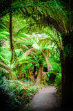Maits Rest Rainforest Trail on Great Ocean Road, Australia Stock Photo