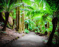 Maits Rest Rainforest Trail on Great Ocean Road, Australia Stock Photos