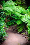 Maits Rest Rainforest Trail on Great Ocean Road, Australia Royalty Free Stock Image