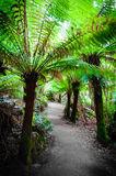 Maits Rest Rainforest Trail on Great Ocean Road, Australia Royalty Free Stock Images
