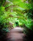 Maitsrust Regenwoudsleep op Grote Oceaanweg, Australië Royalty-vrije Stock Fotografie