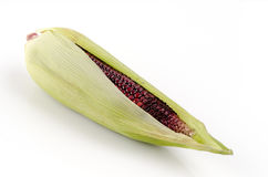 Maiz morado on a white background. (flour corn, Zea mays amylacea). Stock Photos