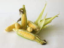 Maize Stock Image