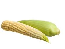 maize royaltyfri foto