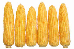 maize royaltyfri bild