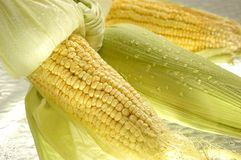 Maize Stock Images