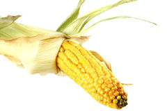 Maize royaltyfria foton