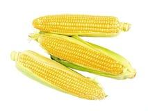 maize arkivfoto