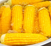 Maize. Boiled corn in thai market Stock Photography