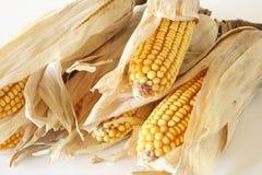 maize Imagens de Stock