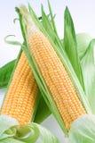 Maize Royalty Free Stock Photo