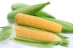 maize Arkivfoton