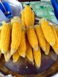 maize Royaltyfri Fotografi
