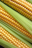 Maize Stock Photography