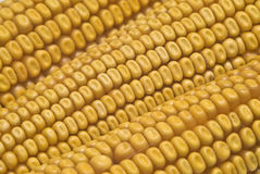 Maize beans texture. Royalty Free Stock Photography