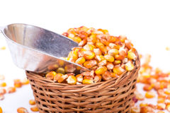 Maize beans in a wooden basket. Isolated on white background Royalty Free Stock Photography