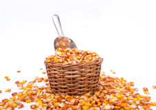 Maize beans in a wooden basket Royalty Free Stock Photos