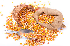 Maize beans in a wooden basket Stock Photos