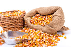 Maize beans in a wooden basket Royalty Free Stock Photo