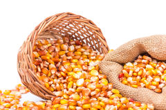 Maize beans in a wooden basket Stock Image