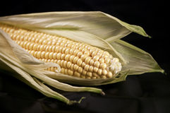 Maize on black Royalty Free Stock Image