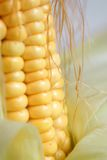 Maize cob. Detail with green leaves royalty free stock photo