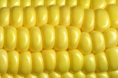 Maize cob. Close-up of maize cob royalty free stock photos