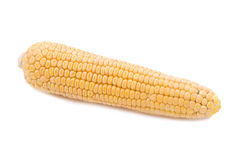 Maize cob Stock Photography