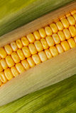 Maize cob Royalty Free Stock Photography