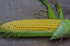 Maize cob detail Stock Photo