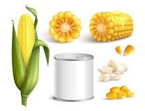 Corn Realistic Set Stock Photography