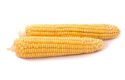 Maize cobs Royalty Free Stock Photos