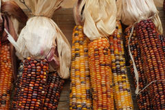 Maize colorful Indian corn Royalty Free Stock Photos