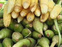 Maize Corn. Raw Maize Corn with cover Stock Photo