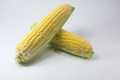 Maize, corn. Maize also known as corn, is a large grain plant first domesticated by indigenous peoples in southern Mexico about 10,000 years ago Royalty Free Stock Photography