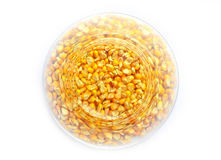 Maize corn background. On white isolated background Royalty Free Stock Photos
