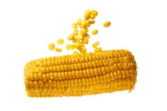 Maize corn cob Stock Photos