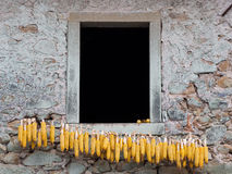 Maize, corn cobs dring on line outside house, rural Italy. stock photos