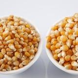 Maize corn Stock Photography