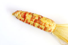Maize corn. Have many colors in the grain of wheat of the same pod Royalty Free Stock Photography