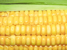 Maize the corn in Macro Royalty Free Stock Image