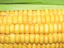 Maize the corn in Macro. Very close closeup Royalty Free Stock Image