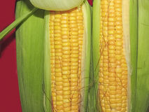 Maize the corn in Macro Stock Photos