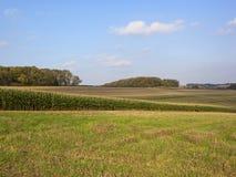Maize crop and woodland Stock Photos