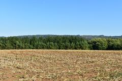 Maize cultivation field after the harvest and trees with blue sky. Agriculture landscape. stock photos