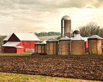 Maize farm Stock Image
