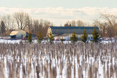 Maize field pictured in January in central Quebec. Royalty Free Stock Photos