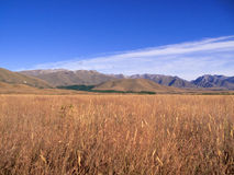 Maize fields frame New Zealand mountains Royalty Free Stock Images
