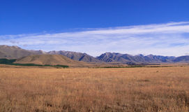 Maize fields frame New Zealand mountains Stock Image